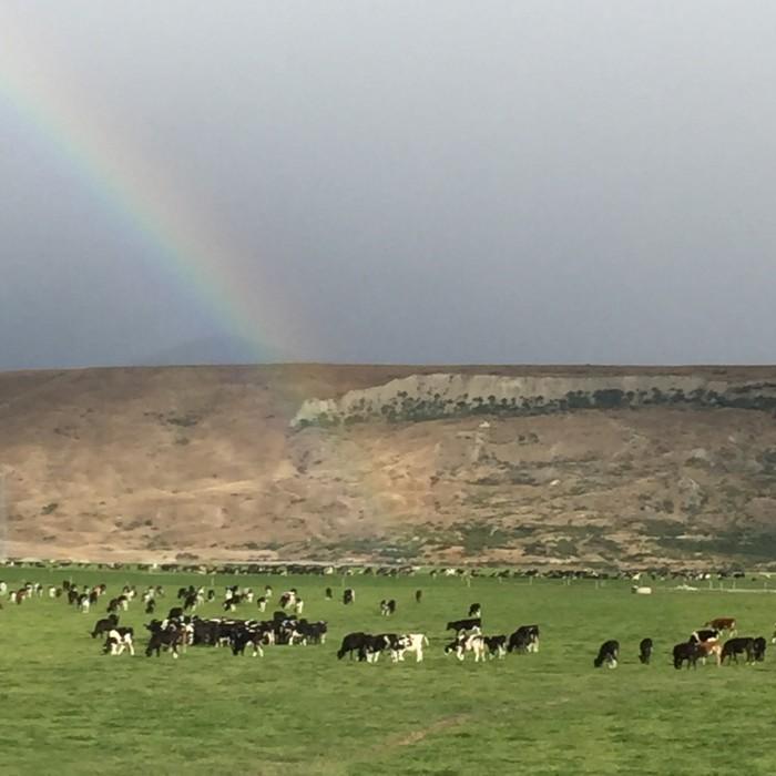 neuseeländische Landschaft