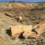60 Millionen Jahre alte versteinerte Bäume