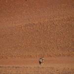 Oryx in der Wüste
